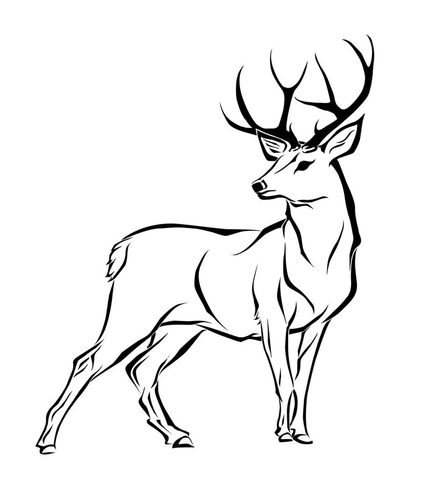Drawn dear black and white ClipArt drawings Deer Best Best