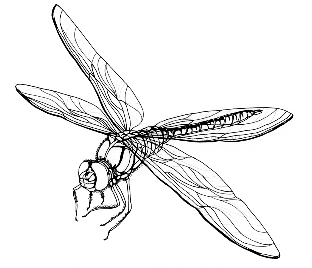 Realistic clipart dragonfly #3