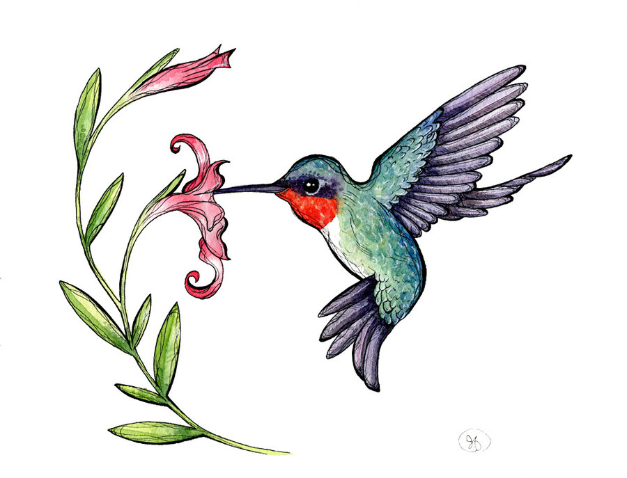 Drawn hummingbird rufous hummingbird Hummingbird Ruby Clipart throated Hummingbird