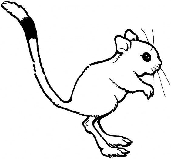 Drawn rat small kid Kangaroo Drawing Free Clipart Images