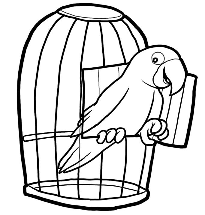 Parrot clipart cage Parrot Art Cartoon Download Clip