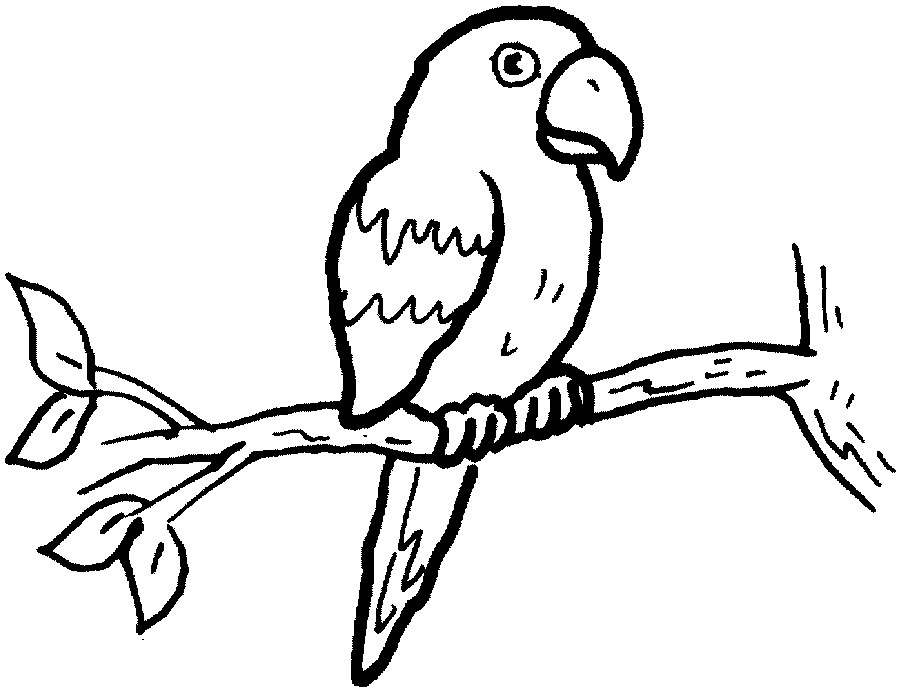 Monochrome clipart parrot White Black outline clipart And