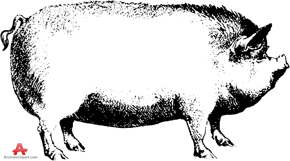 Amd clipart pig Drawing Download Pig Drawing Clipart
