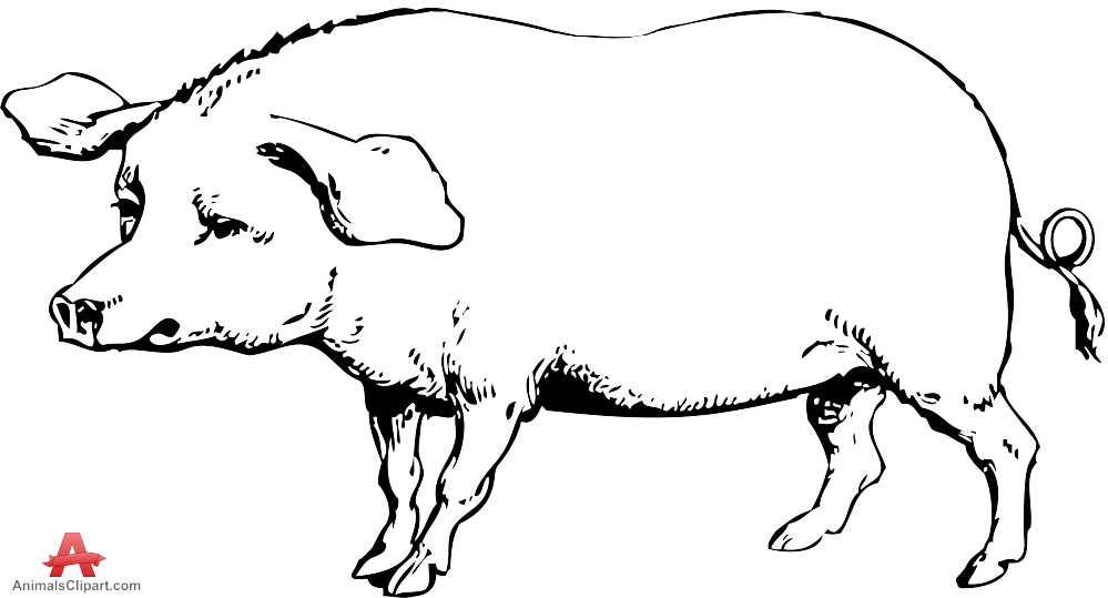 Pig clipart drawing Pig Free Drawing Clipart Pig