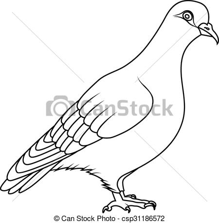 Bird clipart pigeon Pigeon Illustration Search book: Coloring