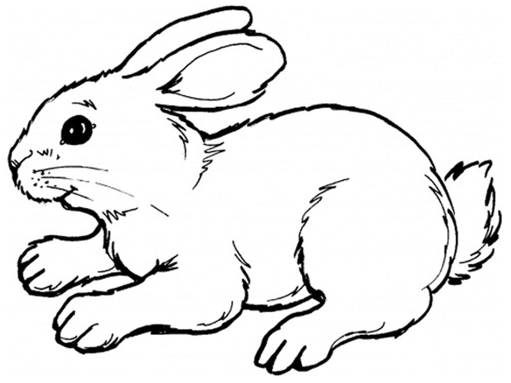 Drawn rabbid basic Rabbit Drawing Download Drawing Clipart