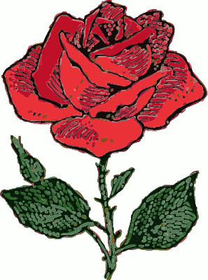 Drawn red rose blooming rose Rose graphics Flower Domain Free