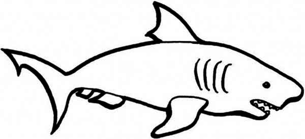Drawn shark stencil Coloring of A Art on