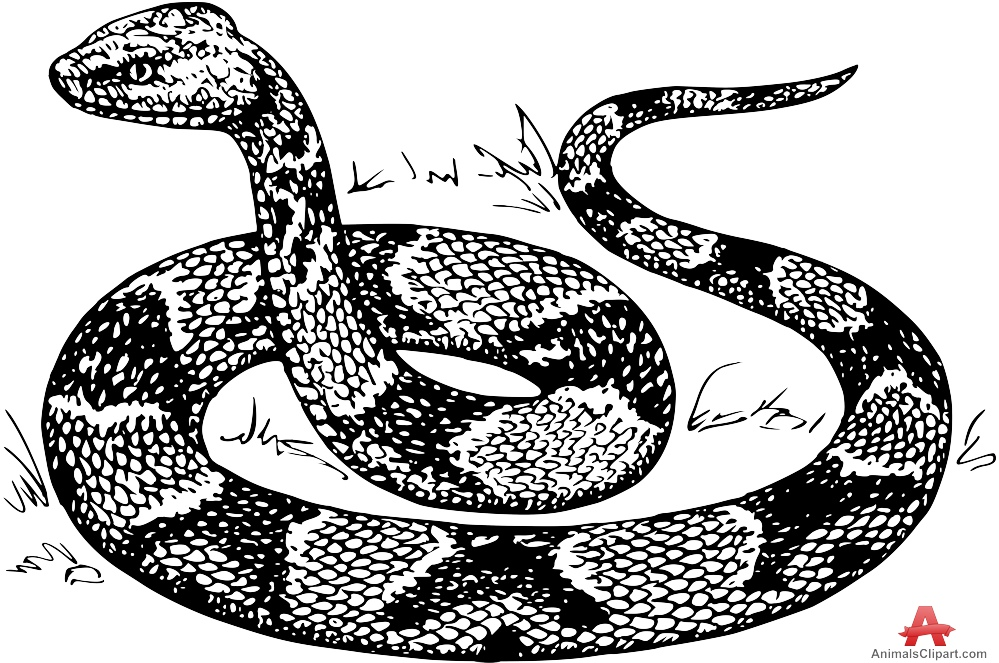 Drawn snake carton Drawing Design Download Clipart Copperhead