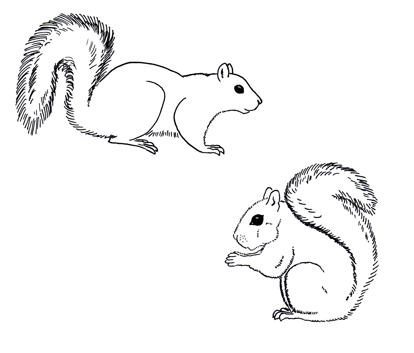 Drawn squirrel hand drawn Grey Does Squirrels Chuck Does