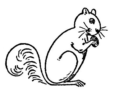 Drawn rodent basic Graphics Printable Kids Squirrels Draw