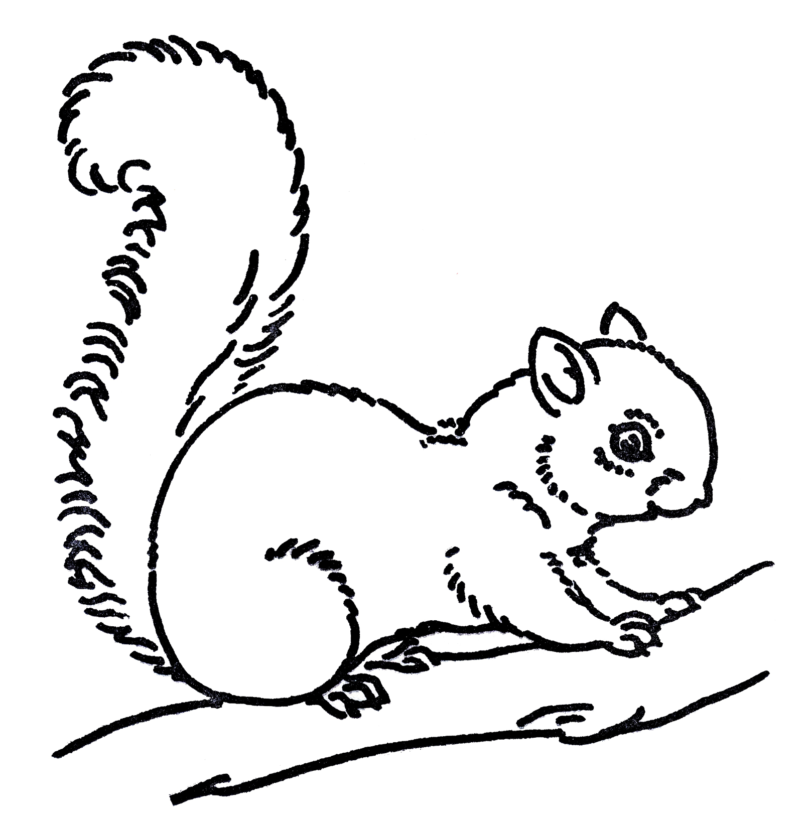 Drawn rodent rodent Squirrel Line Images Art Squirrel