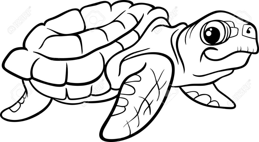 Tortoise clipart black and white #6