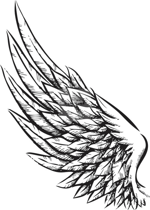 Wings clipart drawn Clip Free Drawing on Clip