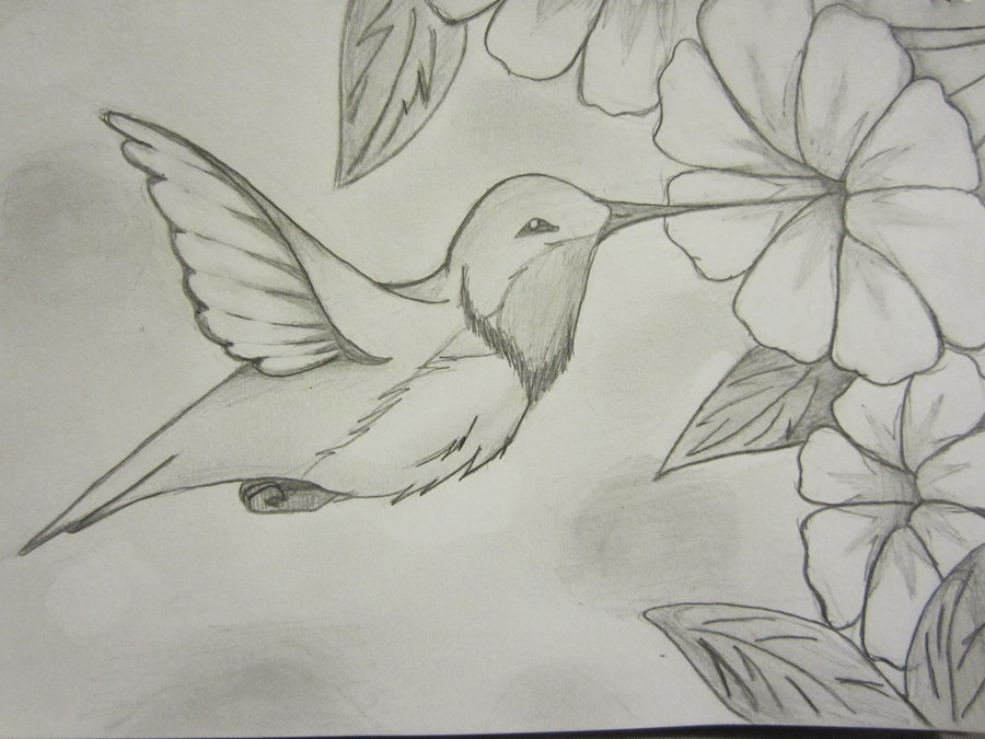 Drawn hummingbird amazing bird Find this Painting and Pin