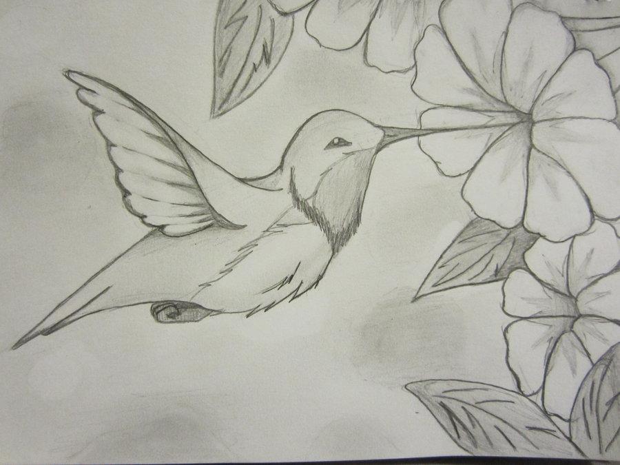 Drawn hummingbird hummingbird flower On 20+ Best more Pinterest