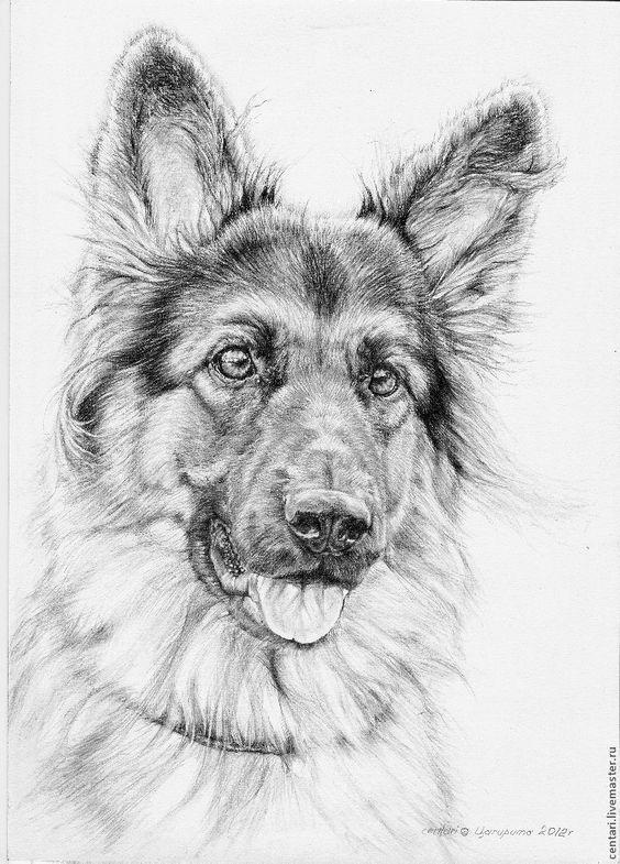 Drawn hawk german Ideas pin Dog German on