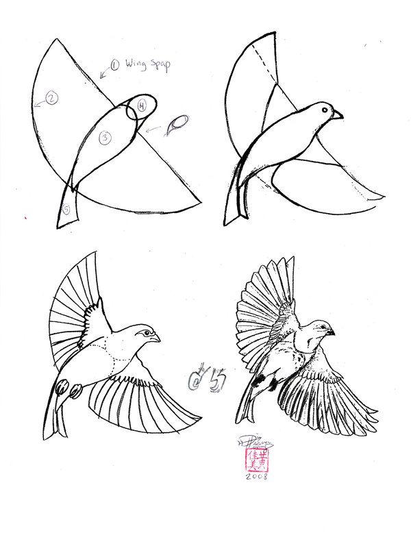 Drawn fly Pinterest best draw sheets How