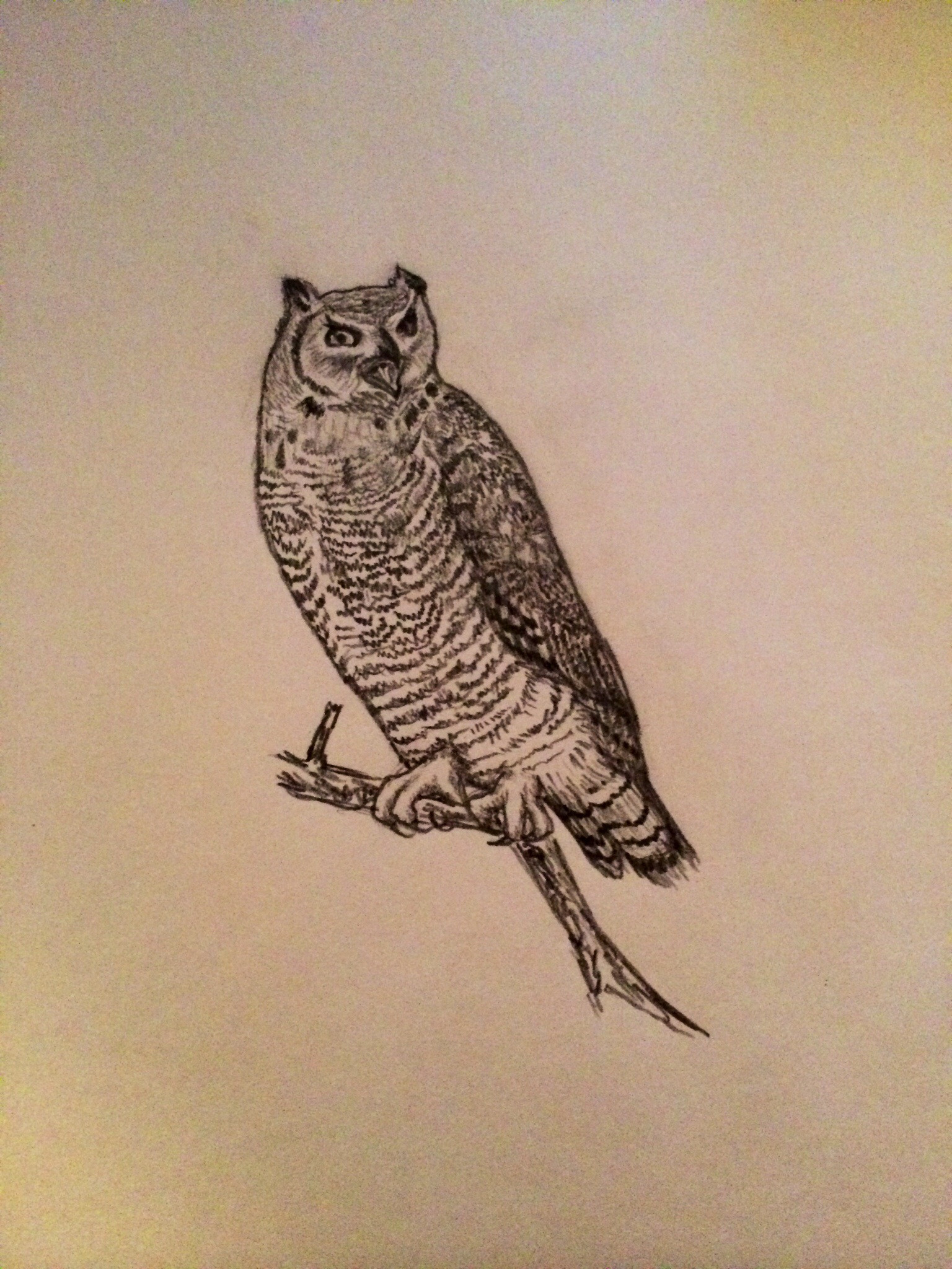 Drawn album cover owl Incorporated a digital 'thing' later