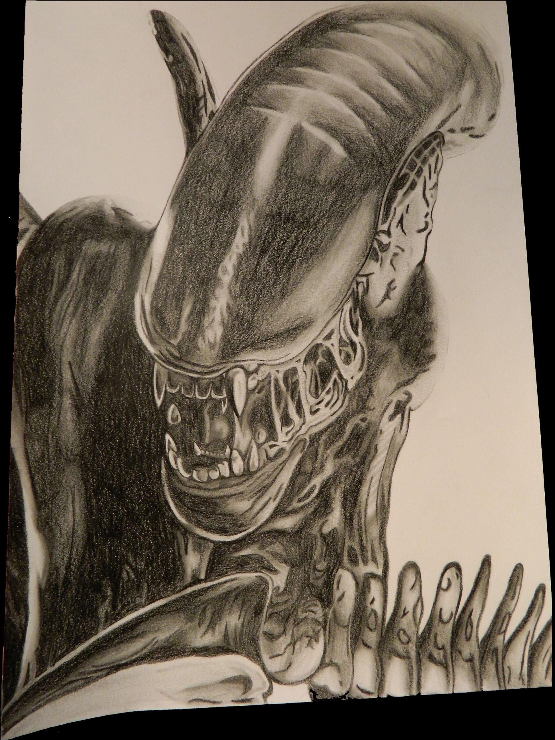 Drawn predator alien vs predator VS How Alien Predator Xenomorph