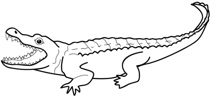 Drawn alligator #3