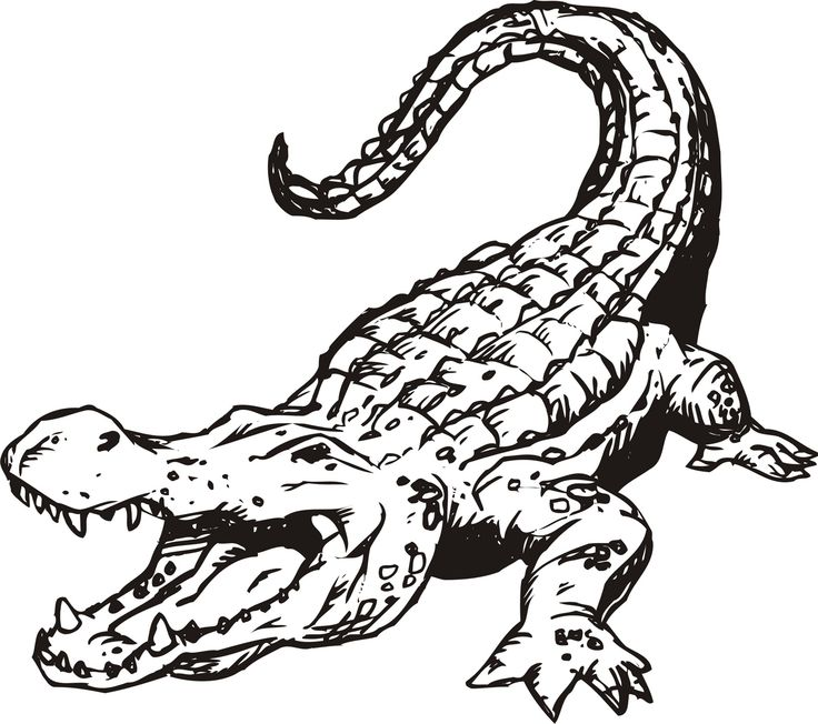 Drawn alligator Alligator >  > Icons
