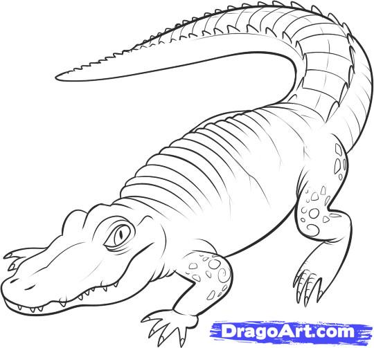 Drawn alligator #6