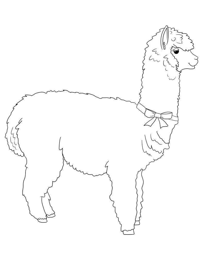 Drawn alpaca Lineart by by DeviantArt Meeowy