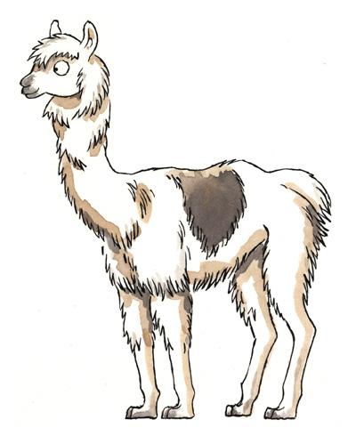 Drawn alpaca At venues Liverpool and the
