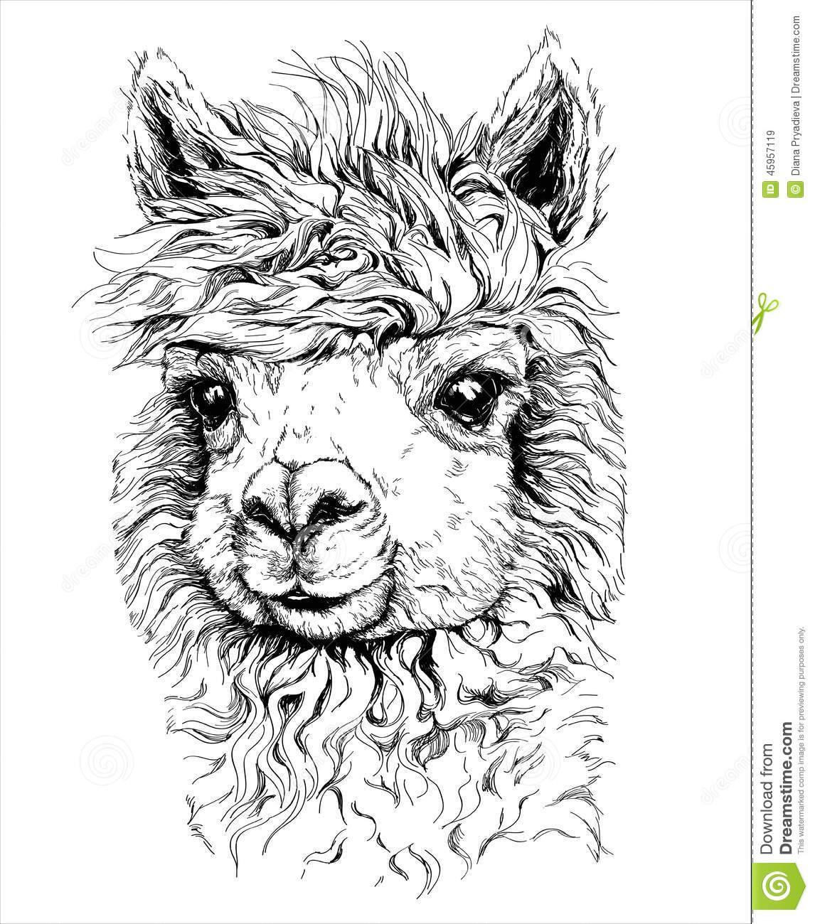 Drawn alpaca Drawing Google  Google Pinterest