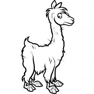 Drawn alpaca Alpaca step an Alpaca