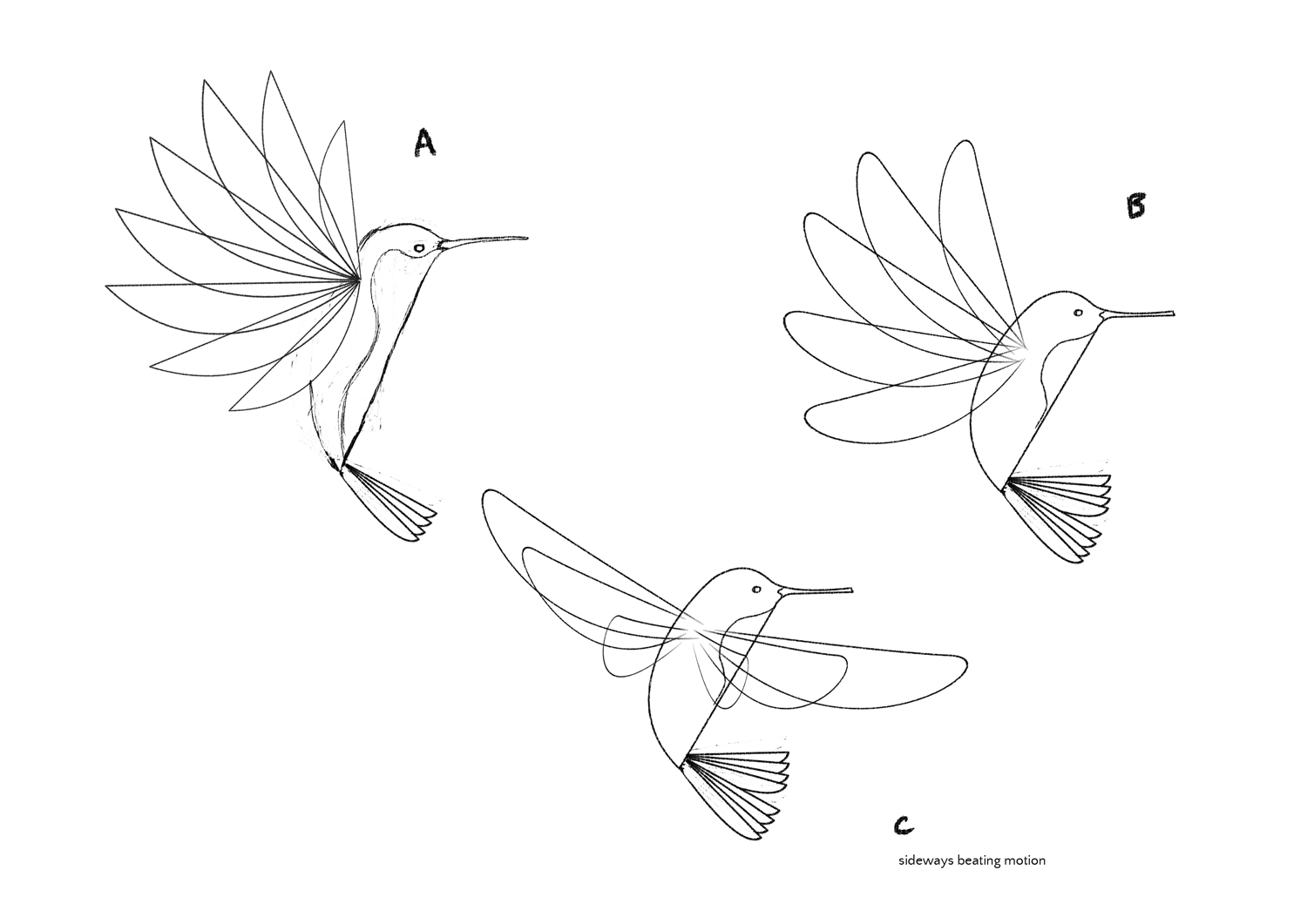 Drawn amd garden Tips drawn draw birds: Step