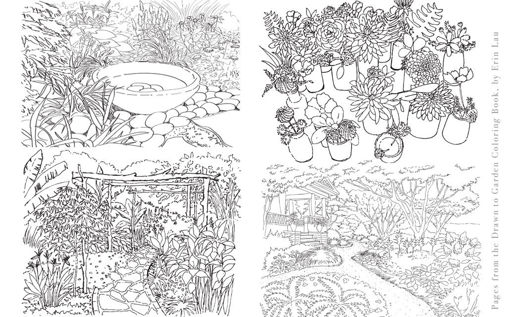 Drawn amd garden Concept Garden Book DrawnToGarden Drawn