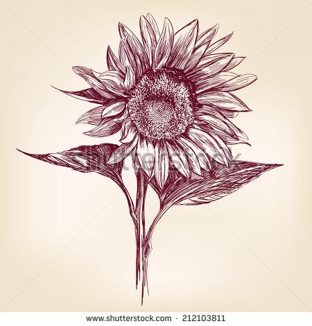 Drawn amd sunflower Sunflowers  images Google of