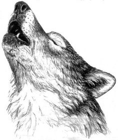 Drawn howling wolf the raven About Drawing Ideas Wolf Google