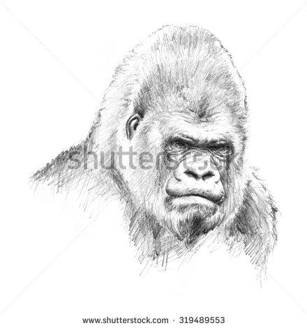 Drawn amour jungle Illustration big Animal primate gorilla