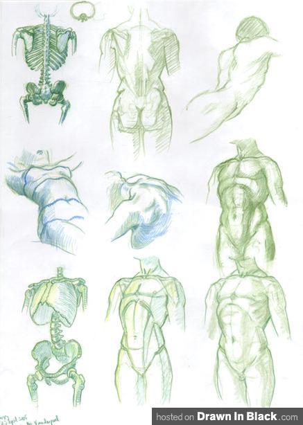 Drawn anatomy