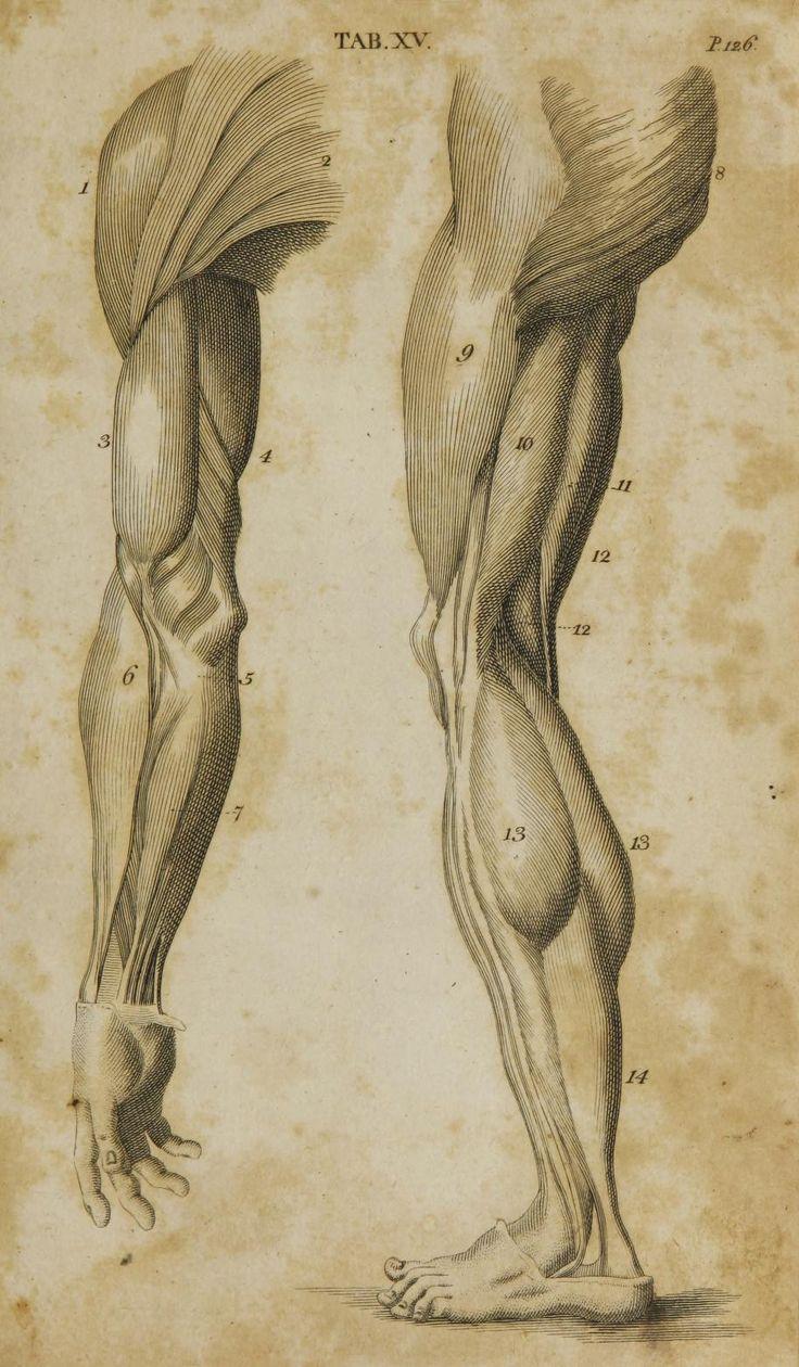 Drawn anatomy First 'Anatomy Pinterest 25+ Anatomy