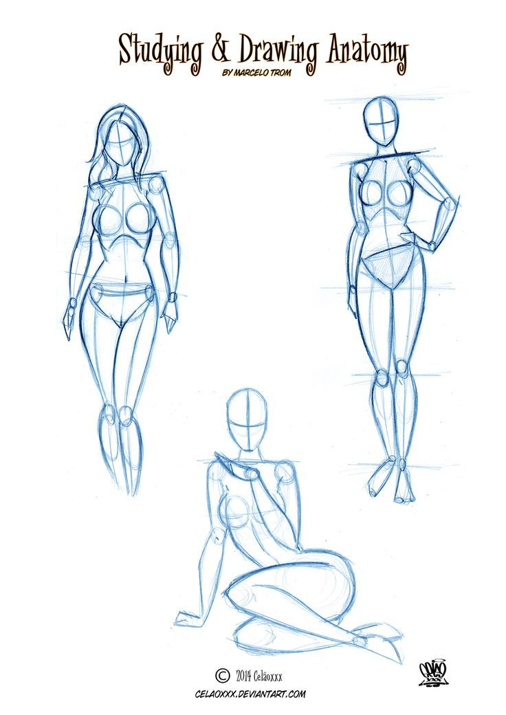 Drawn anatomy Anatomy http://celaoxxx on Pinterest on
