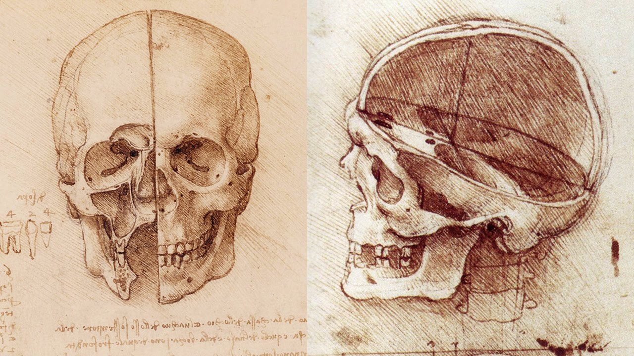 Drawn ssckull anatomy  Anatomy Class Skull to