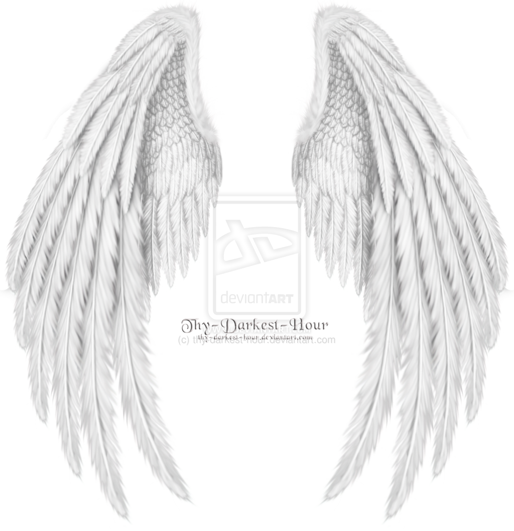 Drawn angel folded wing By psd white  Folded