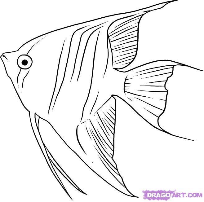 Drawn angelfish Tropical line Google designs Google
