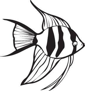 Drawn angelfish  Angel Fish Decal