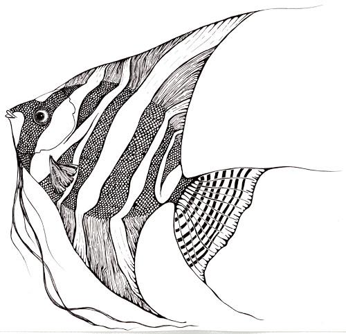 Drawn angelfish Angelfish Prawn Milne Crafty Blog