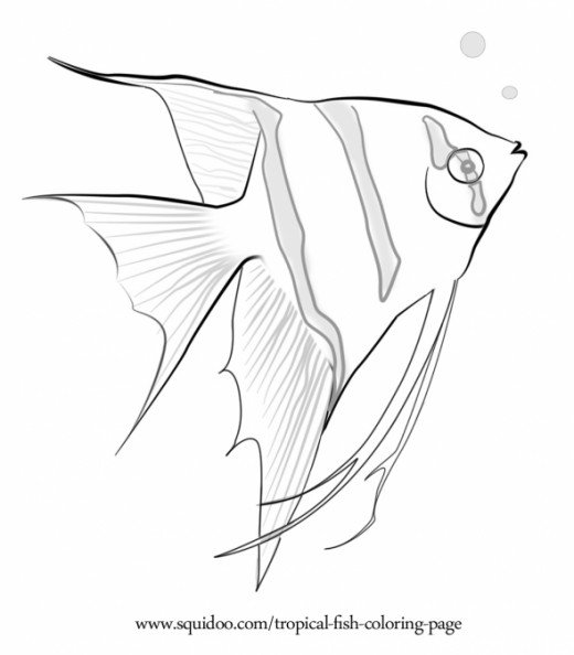 Angelfish clipart pretty fish Page Page Freshwater HubPages Tropical