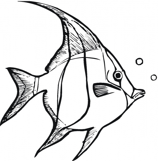 Angelfish clipart black and white And and Clipart Others collection