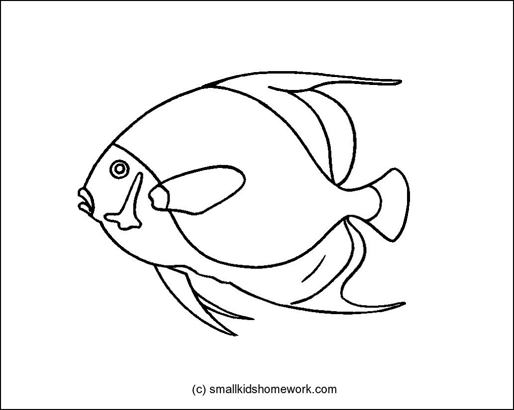 Angelfish clipart orange things French Fish Outline Picture Picture