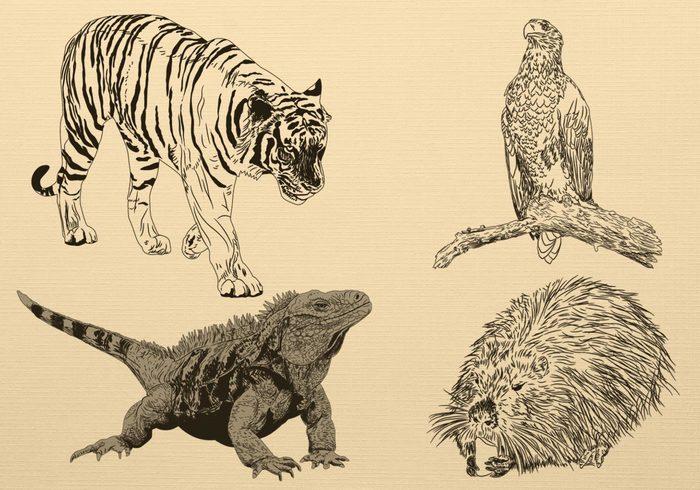 Drawn animal Hand Brusheezy! Animal Hand Drawn