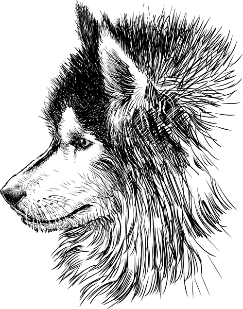Drawn animl Huskies Animal drawn huskies Hand