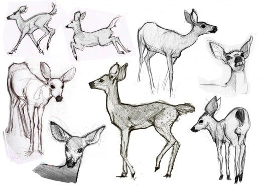 Drawn animl Draw to draw How on